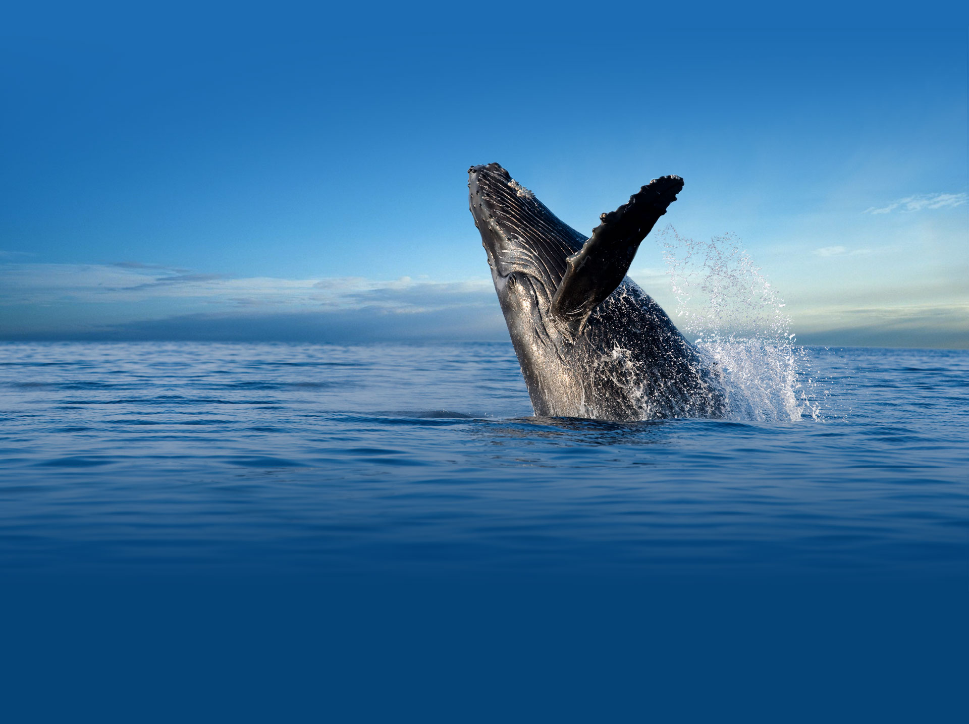Whale Watching Private Cruise