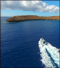 Molokini Snorkeling Tour in the Morning
