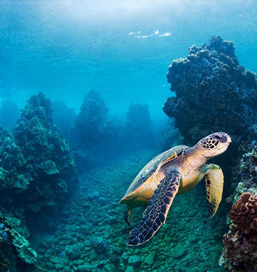 Best Maui Turtle Town Tour