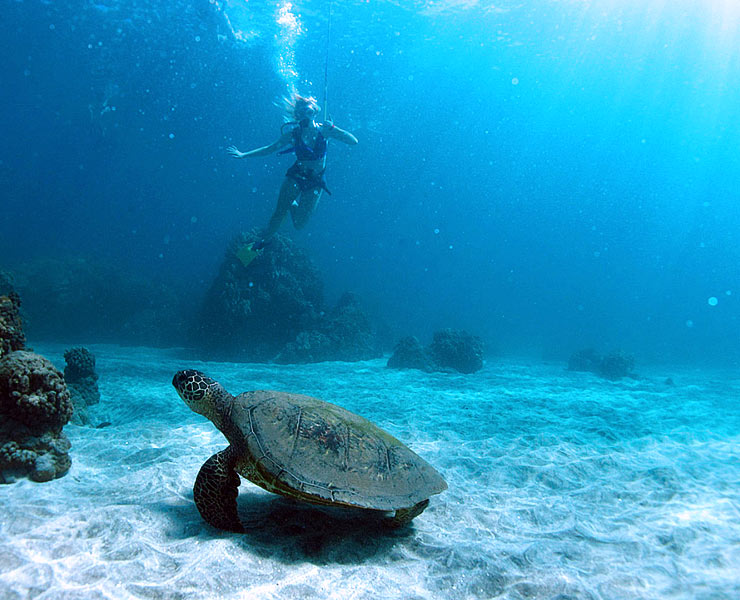 SNUBA diving and Snorkel Cruise