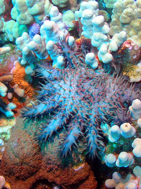 Underwater Marine Life and Coral Reef.