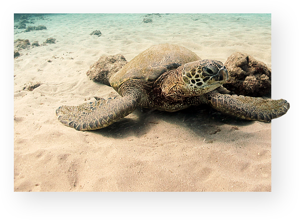 Turtle on the seabed