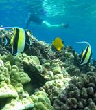 Underwater Sealife Molokini