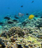 Underwater Sea life Molokini