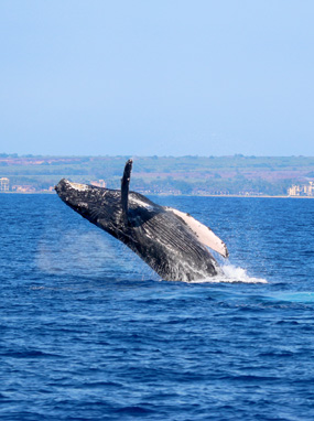 Best Maui Whale Watch Tours