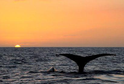 Best Maui Sunset Luau Cruise